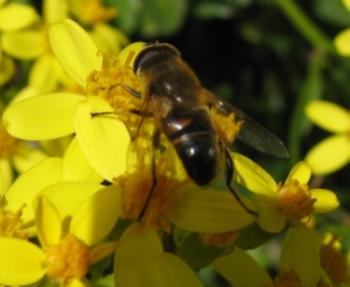 abella21