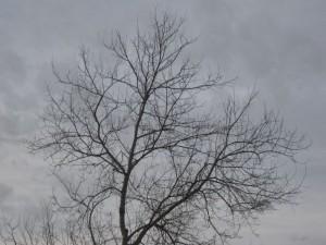 Lledoner despullat (la Pedrera)